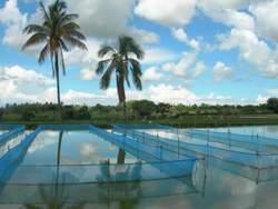 Aquaculture in Domasi Zomba Malawi