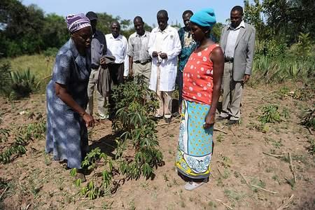 CCAFS Crop diversification in Lower Nyando, Kenya