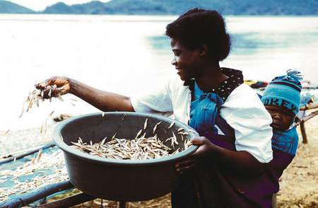 African fisheries will benefit from a new agreement between NEPAD and WorldFish.