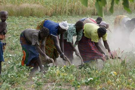 Young people plowing the land in Burkina Faso. Agriculture may not seem like an appealing career, but youth can actually thrive in the profession.