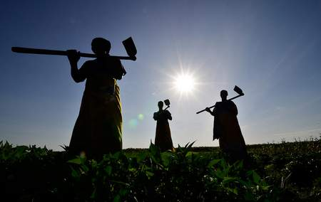 Capacity building for Africa means education and awareness on the incorporation of science and technology into agriculture.