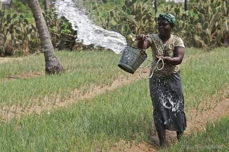 """""""L'agriculture intelligente"""" reduit l'effet du changement climatique sur l`agriculture. Et vice versa!"""
