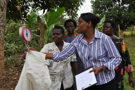 AWARD Fellow Dr. Sarah Mubiru, a Senior Agricultural Advisor with SNV, the Netherlands Development Organization, won first prize in the 2010 African Women in Science competition for her work in developing a computer-based dairy feeding decision support tool (ENDIISA) in Luganda and English. It is currently available on the National Agriculture Research Organisation website for use by dairy farmers, extension advisors, researchers, and students. (Above) Dr. Mubiru teaches Ugandan farmers to collect data on fodder production. Photo: Karen Homer/AWARD