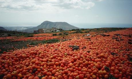 food waste tomato