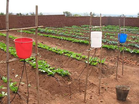 Fifteen-Litre buckets used by small scale vegetable farmers for a drip irrigation system in semi-arid Malawi.