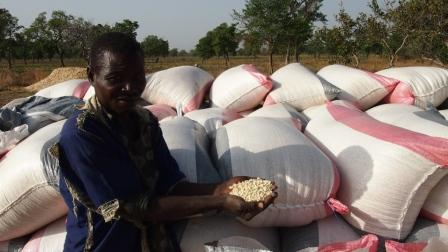 Innover dans la recherche pour réduire les pertes après récolte chez les petits agriculteurs.