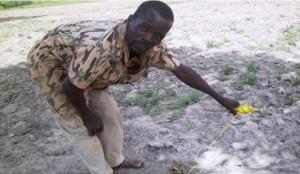 Abdoul Aziz Nignan, traçant les lignes pour la mise en terre de semences de mais