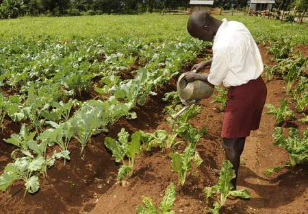 A student waters a school garden at Nyamninia Primary School in Sauri Millennium Village, Kenya. African education should include practical agricultural instruction in addition to theory.
