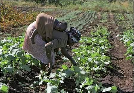 Avec son enfant sur le dos, cette femme veille à assurer son rôle dans la production agricole.