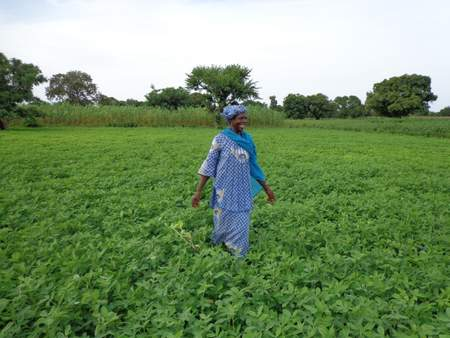 A woman farmer in her groundnut field, Wakor village, Mali. Climate-smart groundnut varieties are helping women adapt to a variable climate.
