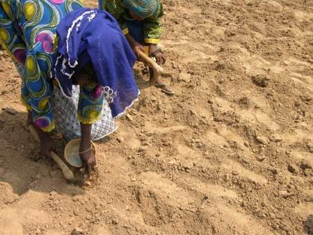 Women in Burkina Faso applying fertilizer by microdose at planting.