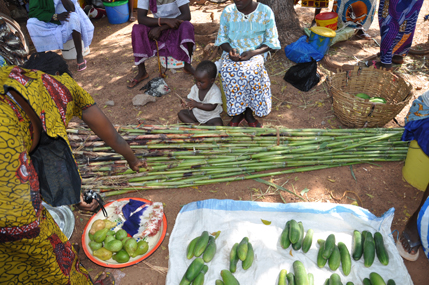 Women selling sweet sorghum stalks at market