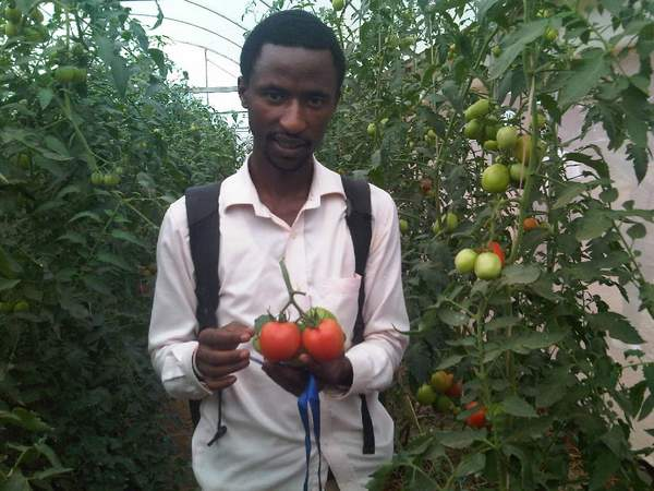 The author in the cooperative's tomato green house