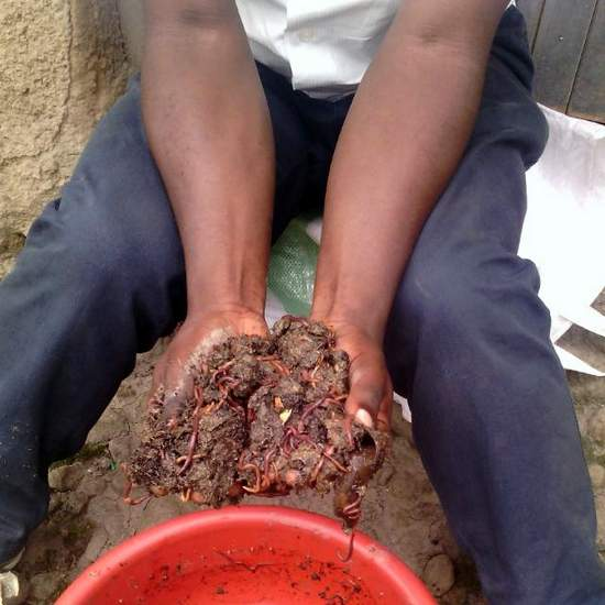 Vermicompost: a natural fertilizer